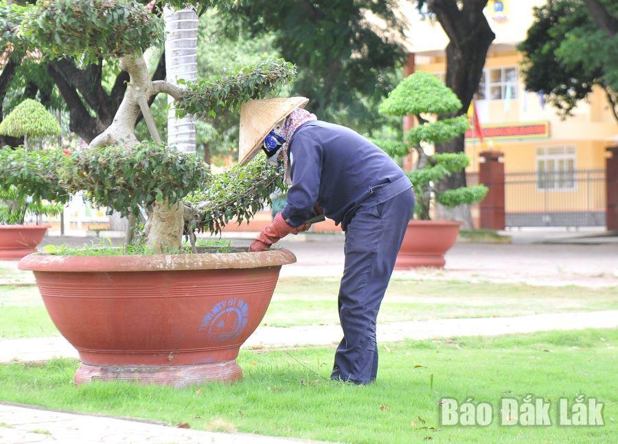 Công nhân của Công ty TNHH Một thành viên Đô thị và Môi trường Đắk Lắk cắt tỉa cây cảnh trang trí trên đường phố.